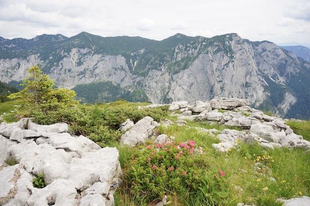 녹색으로 뒤덮인 산의 숨막히는 풍경
