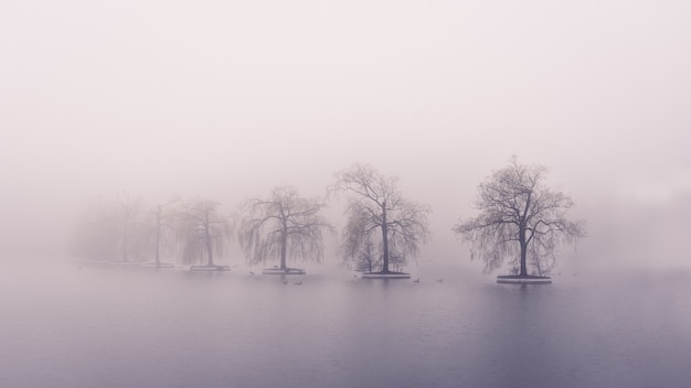 네덜란드의 zoetermeer, 오래된 floriade 지형의 숨막히는 풍경