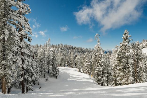 Scenario mozzafiato di un bosco innevato pieno di abeti sotto il cielo limpido