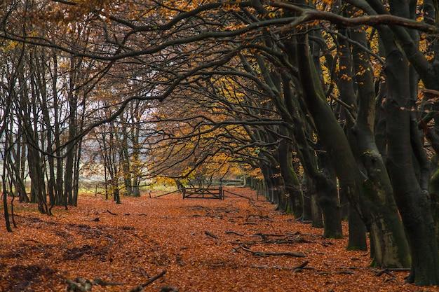 地面に赤い葉が付いている秋の木の裸の枝の息をのむようなショット