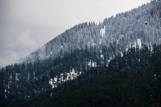 Breathtaking shot of a snowy hillside of a mountain fully covered with trees