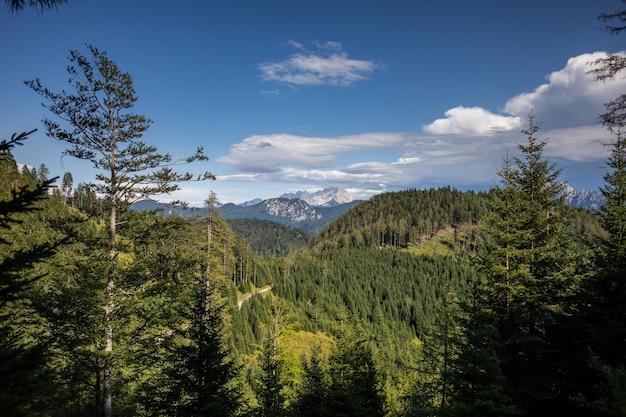 Vista mozzafiato di una foresta meravigliosa con molti alberi
