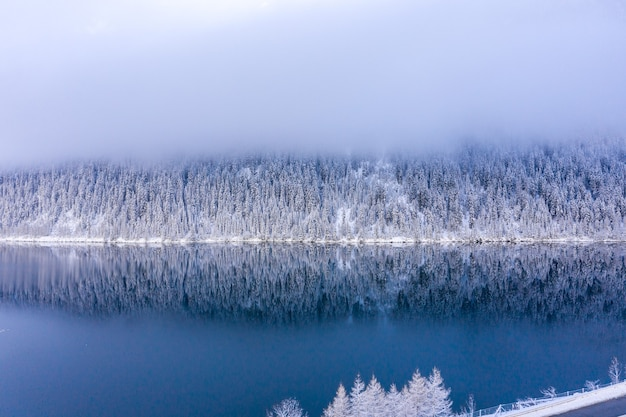 Breathtaking view of beautiful snow-covered trees with a calm lake under a foggy sky
