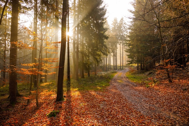 Breathtaking view of early morning sunrise in the woods with beautiful autumn colors