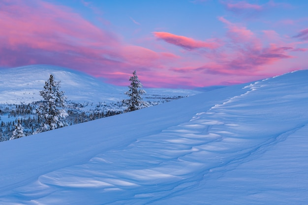 Vista mozzafiato di una foresta coperta di neve durante il tramonto in norvegia