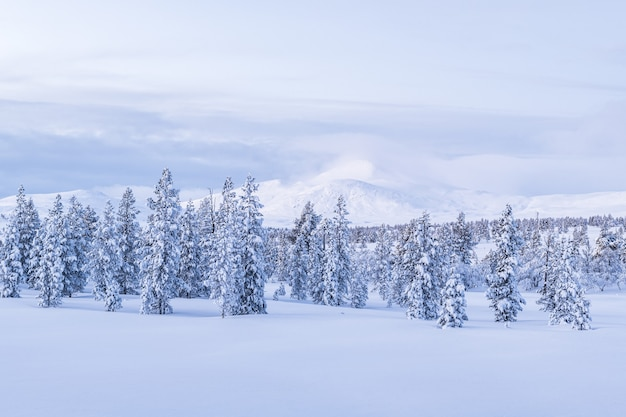 Breathtaking view of a forest covered with snow during sunset in norway