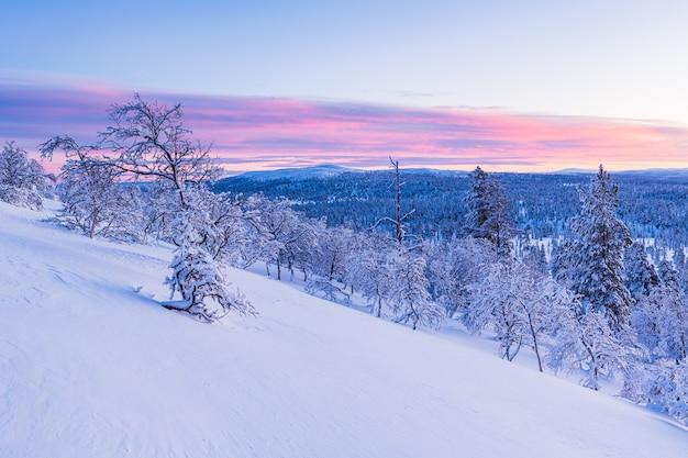 Захватывающий вид на заснеженный лес во время заката в норвегии
