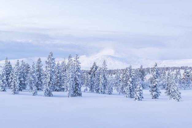 노르웨이의 일몰 동안 눈으로 덮인 숲의 숨막히는 전망