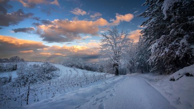 クロアチアの曇り空の下でキラリと光る雪に覆われた小道と木々の息を呑むような景色