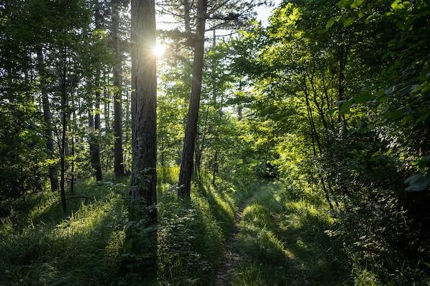 나무가 많은 놀라운 숲의 숨막히는 전경