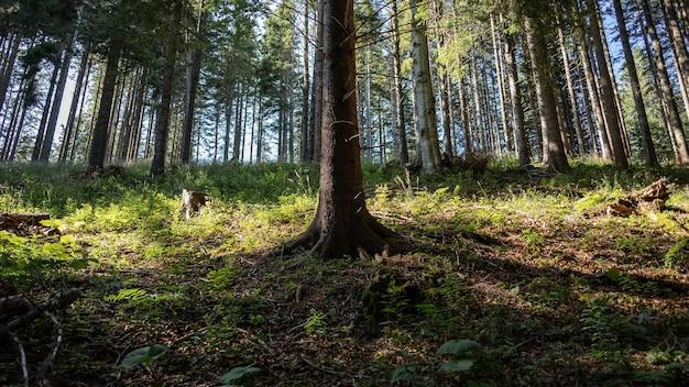 Захватывающий вид на удивительный лес с множеством деревьев.