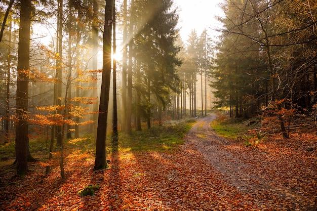 아름다운 단풍과 함께 숲에서 이른 아침 일출의 숨막히는 전망