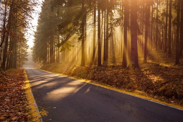 Захватывающий вид на восход раннего утра в лесу с красивыми осенними красками