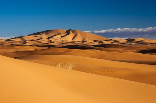 Захватывающий вид на песчаные дюны в пустыне с чистым голубым небом.