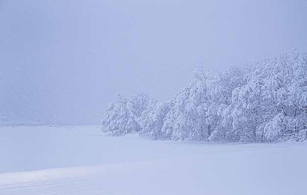雪に覆われた野原にある雪に覆われた木の息を呑むような景色