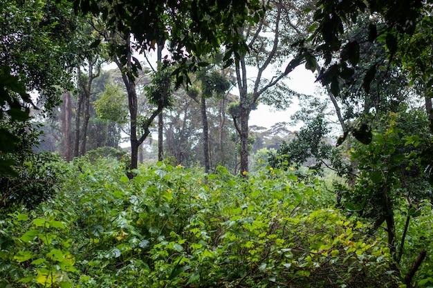 삼부 루, 케냐의 아름다운 식물과 나무가있는 녹색 열대 정글의 숨막히는 전망