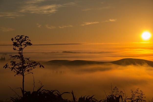 ニュージーランドのホークスベイで日没時に撮影された木々と霧の丘の息を呑むような景色