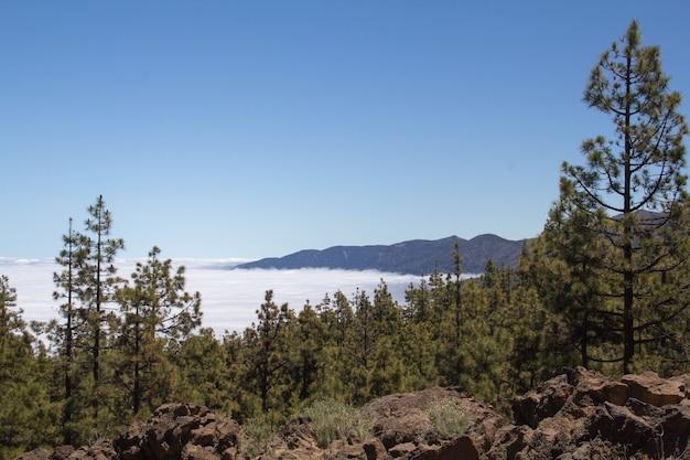 霧深い山々が見える丘の上の木々の息をのむような景色
