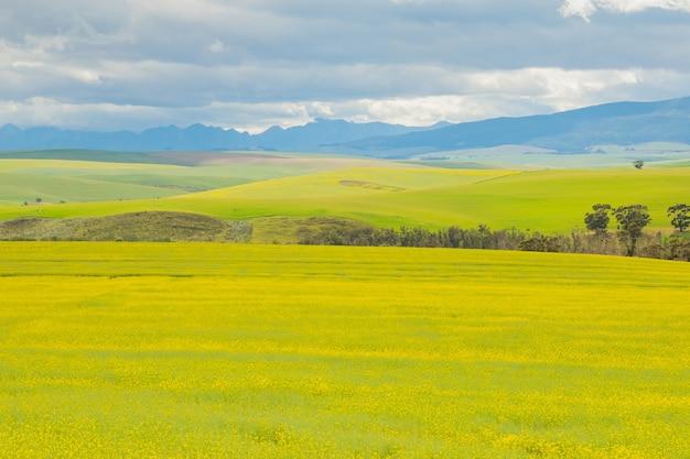 Захватывающий вид на обширные покрытые травой луга в пасмурный день.