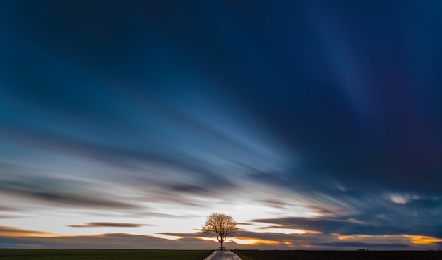 Breathtaking view of a tree in the middle of a grassy field with the beautiful colorful sky