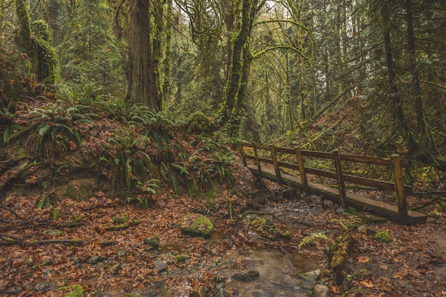 Breathtaking view of a wooden bridge in a tropical forest covered in moss