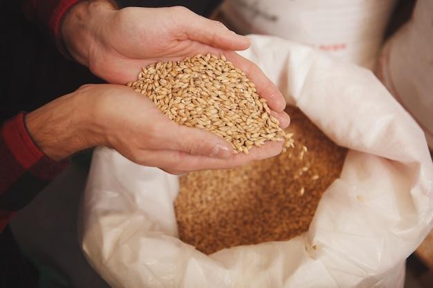 Пивовар засыпает семена ячменя в мельницу на своей пивоварне