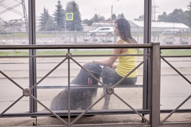 Briard와 여자는 도시 거리에서 버스를 기다리는 동안 대중 교통 정류장에 앉아 있습니다.
