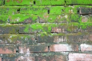 Brick and moss wall texture  green