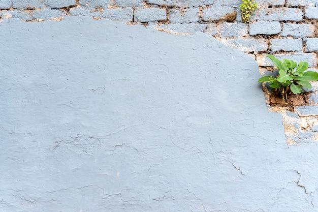벽돌 벽 복사 공간 배경 및 식물
