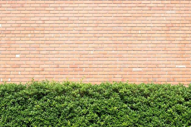 Brick wall and green plant