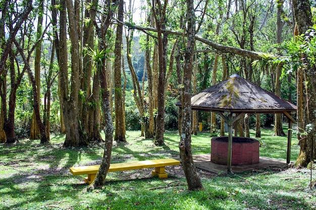 열대 나무와 안뜰 한가운데에 벽돌 벽 프리미엄 사진
