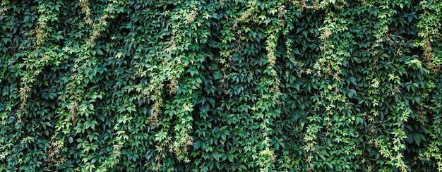 Кирпичная стена с плющом