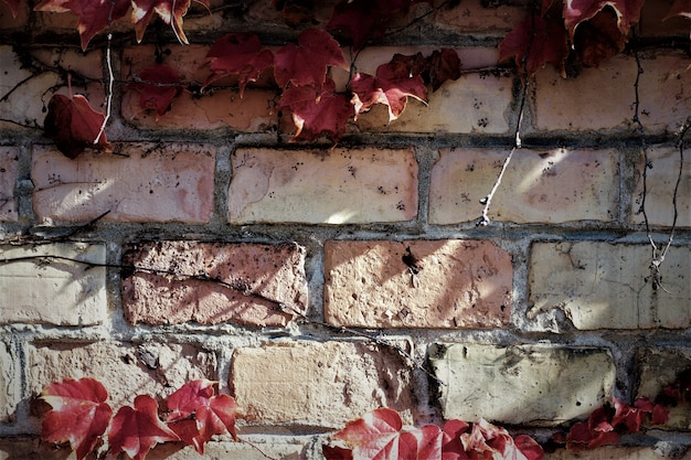 Brick wall witherspoon leafs