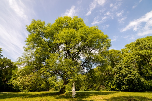 The bridal wedding dress hanging on the tree branches. tree in a meadow
