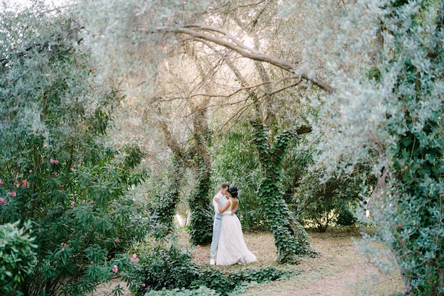 The bride and groom are embracing among the trees entwined with ivy in an olive grove