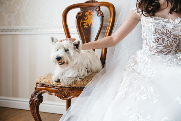 Bride with a beautiful dog on the wedding day