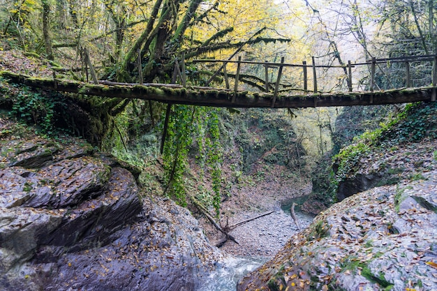 Bridge across the river, hiking in forest of sochi, russia.