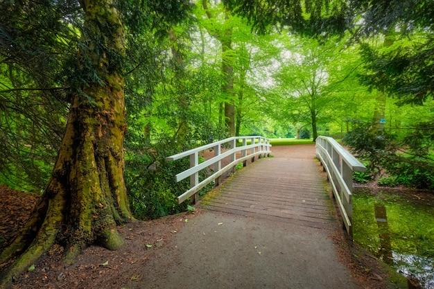 公園の橋。