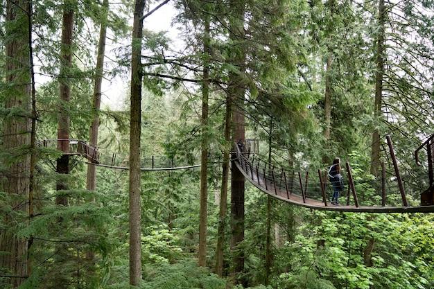 ジャングルの橋