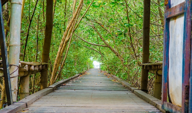 Bridge to the mangrove forest