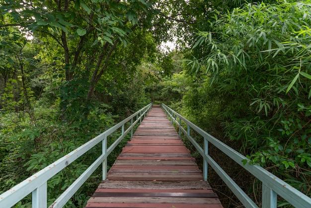 Bridge at misty tropical rain forest.