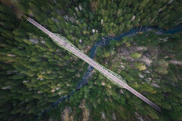 森の中の川に架かる橋