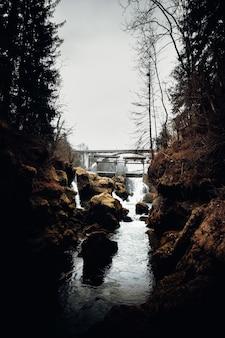 裸の木の間の川に架かる橋
