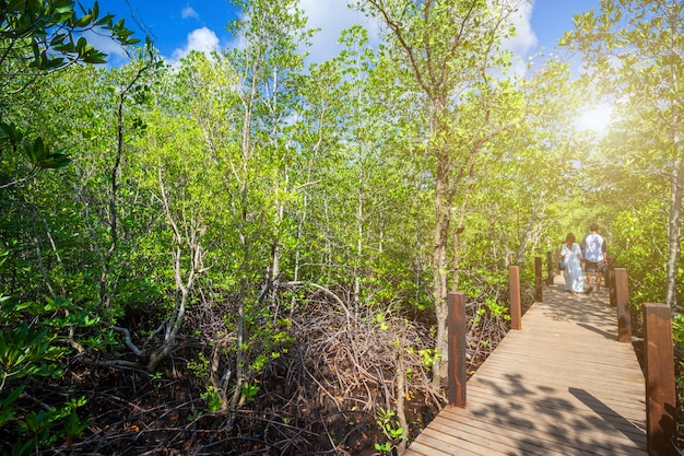 Bridge wooden walking way in the forest mangrove in chanthaburi thailand.