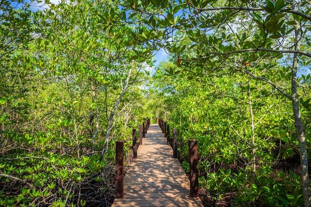 Bridge wooden walking way in the forest mangrove in chanthaburi thailand.