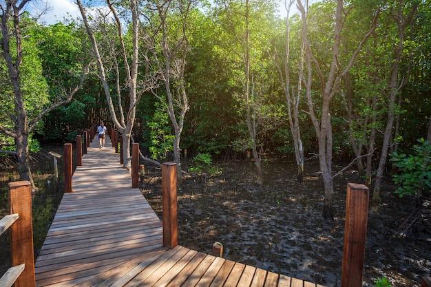 Bridge wooden walking way in the forest mangrove