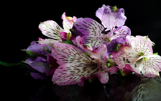 黒い背景に明るいアルストロメリアの花。