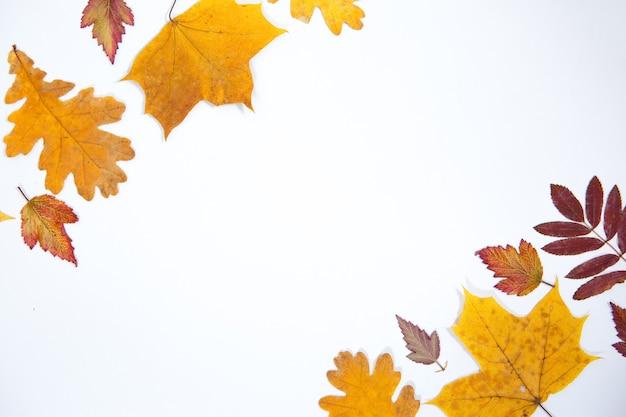 分離されたさまざまな樹種の明るい紅葉