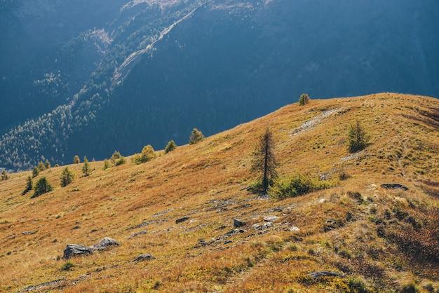 日光の森と山のシルエットの背景に太陽に照らされたオレンジ色の丘の針葉樹と明るい秋の風景。黄金色の丘の上のカラマツと鮮やかな山の風景。