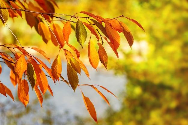 背景をぼかした写真に晴れた日に明るい紅葉